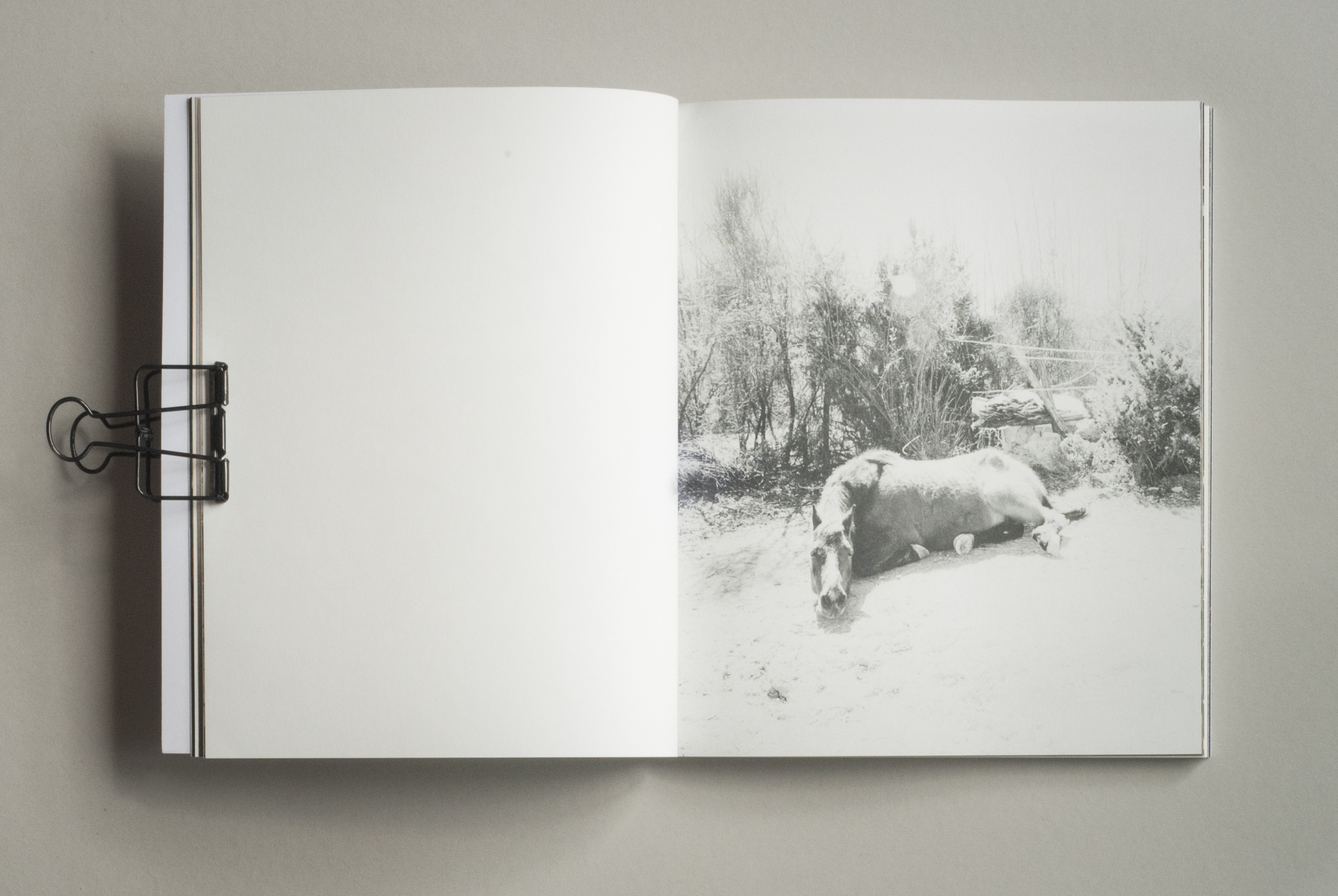 marie dhaese photography book