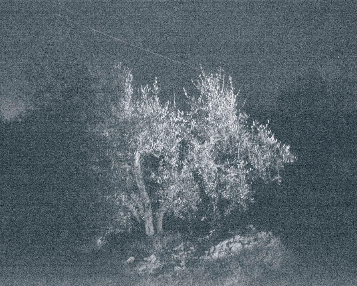 marie dhaese photography tree at night